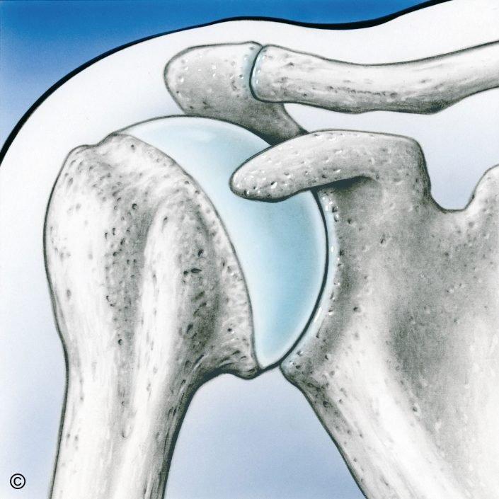 anatomía hombro - Alai Sports Medicine Clinic